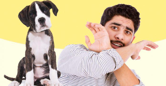 La comanchera chismosa - Es malo banar mucho a los perros ...